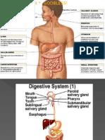 Digestive Sysstem 1