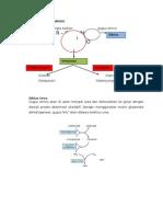 Metabolisme Protein Saat Lapar, Kenyang, Dan Pembentukan NO