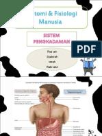 anatomifisiologimanusia-pencernaan-120923110823-phpapp02.ppt