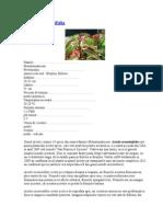 plante acvariu.doc