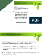 Bosques Xeroiticos y Subxerofiticos