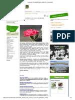 Garoafa, Floarea Celor Nascuti in Ianuarie