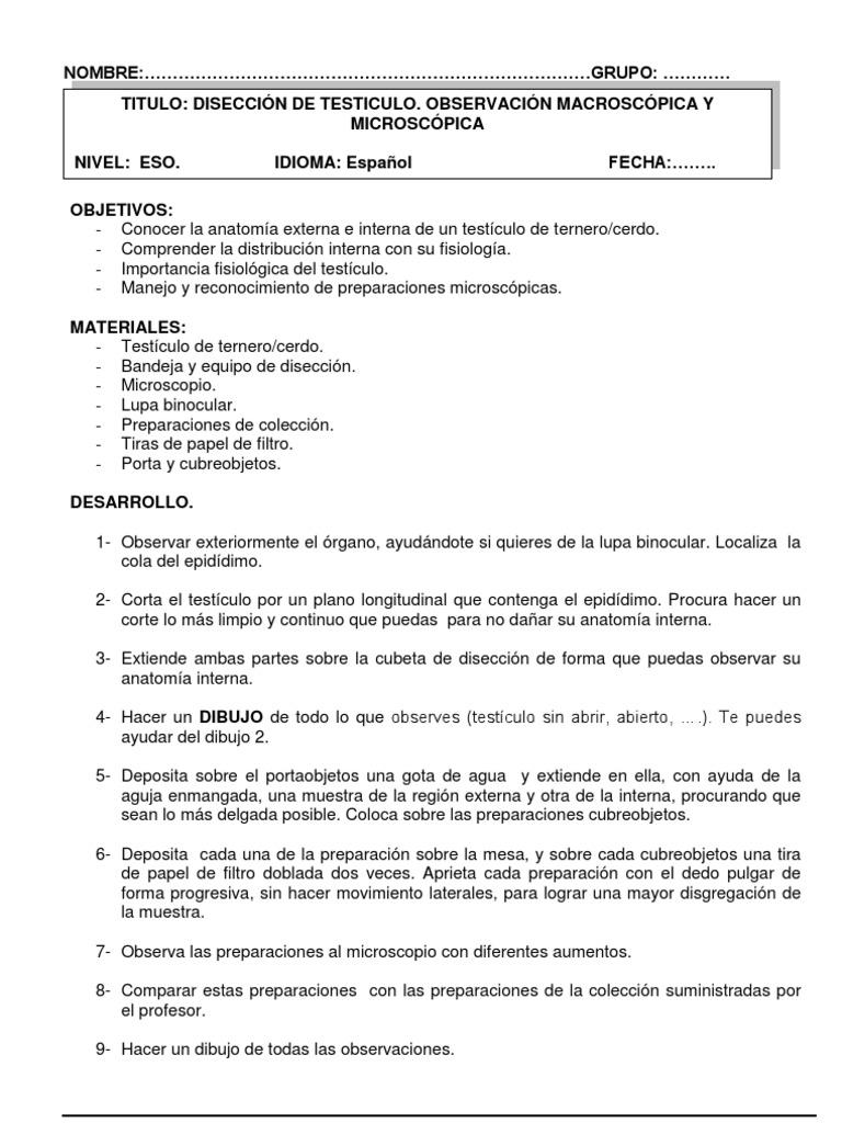Bonito Portaobjetos De Microscopio Anatomía Adorno - Anatomía de Las ...