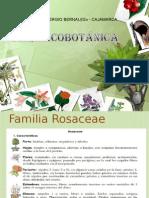 clase 6- rosaceae.ppt