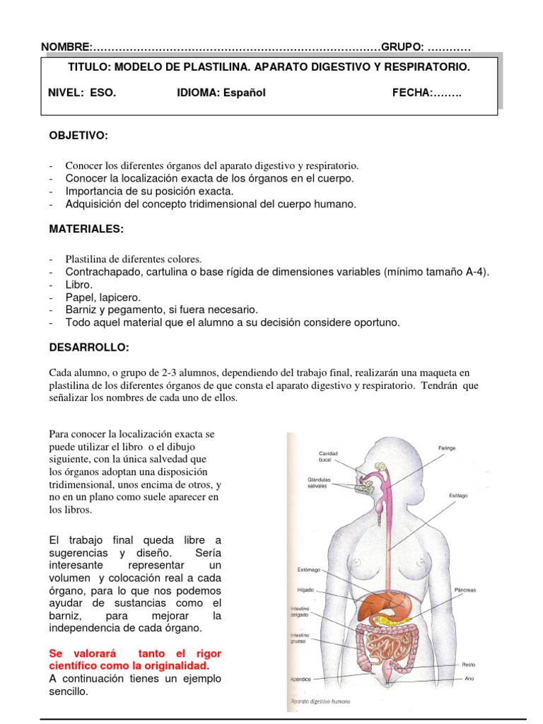 MODELO PLASTILINA APARATO DIGESTIVO-3º ESO