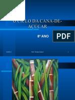 O ciclo da cana de Açúcar 120513211550 Phpapp01