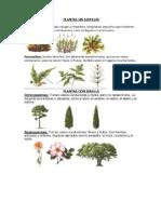 Plantas Con Semilla