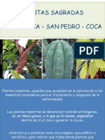 Ayahuasca - San Pedro - Coca