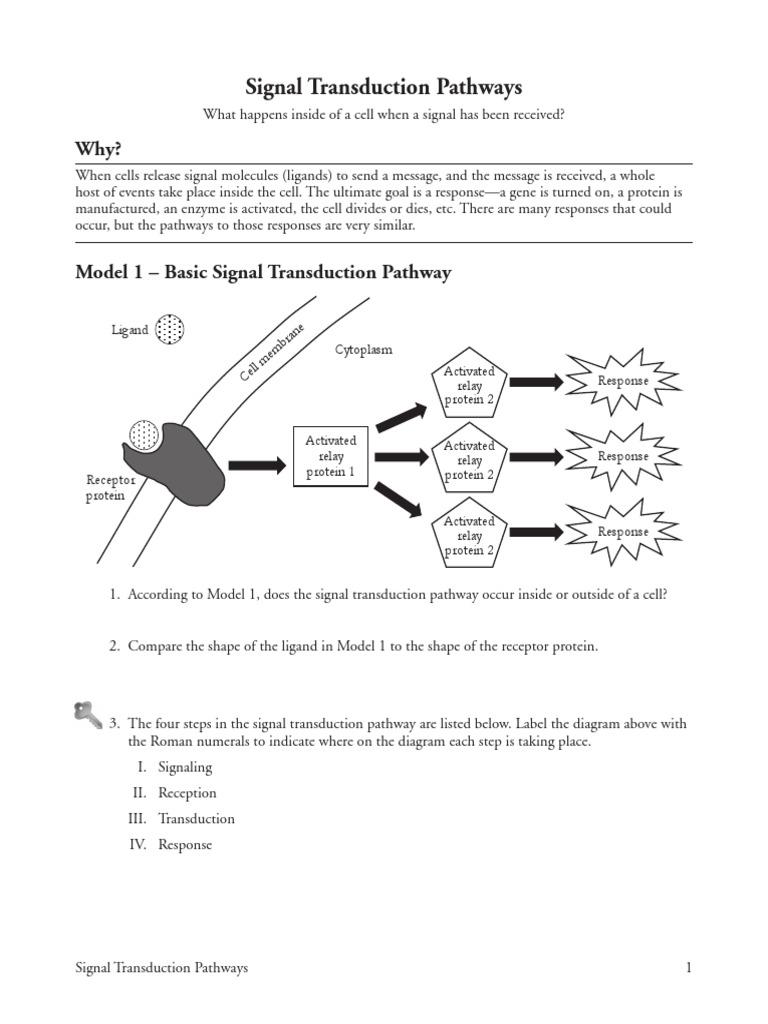 Signal Transduction Pathways Pogil Cell Signaling Signal Transduction