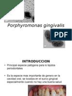porphyromona.pptx