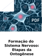 Bases Neuropsicológicas do SNC aula 2 Lu.pptx