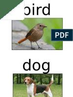 animal flashcard.ppt