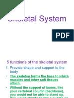 skeletal system pp