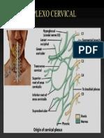 Plexo Cervical Presentacion