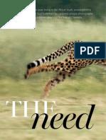 Cheetah Gallery Web
