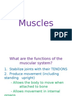 muscular system pp
