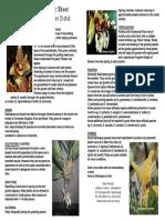 Stanhopea Factsheet