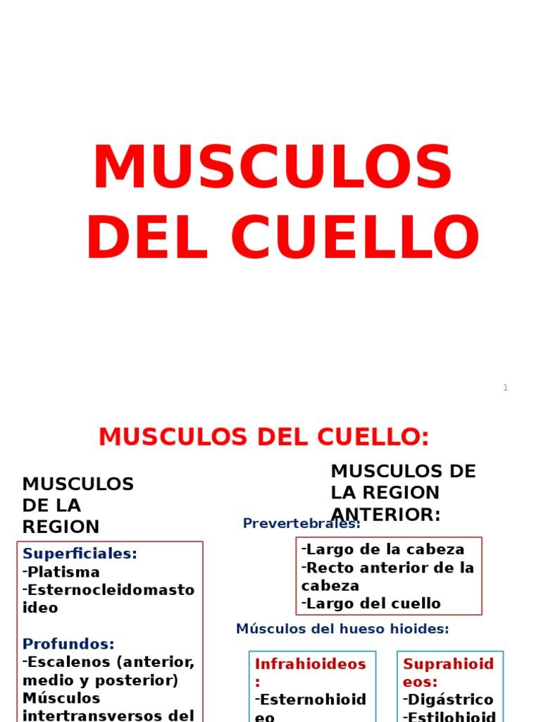 Musculos de Cabeza y Cuello