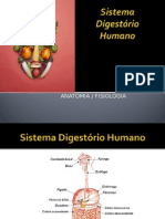 digestorio 2 (1)