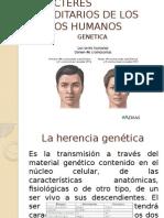 Caracteres Hereditarios de Los Rasgos Humanos