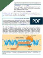 El Flujo de La Información Genética. Guía 4