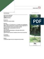 fraxinus_angustifolia