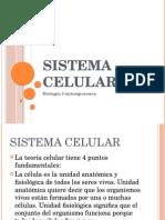 Sistema-celular (1).pptx