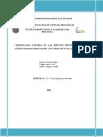 Informe Solanum 2014