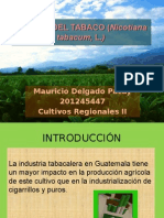 CULTIVO DEL TABACO (Nicotiana tabacum, L.pptx