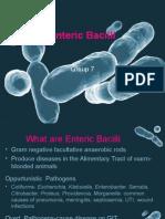 Enteric Bacilli