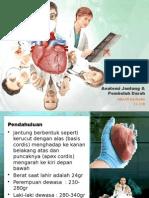 Anatomi Jantung & Pembuluh Darah
