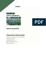 Jardinería - Florales Perennes