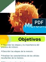 Ciclo Celular MEIOISIS