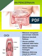 Organ Cerna .pptx