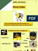 Apicultura Si Albinele Curs (9)