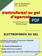 elettroforesi  agarosio