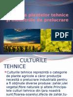 Cultura Plantelor Tehnice Si Industriile de Prelucrare