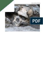 01 Skull of Homo Erectus Throws Story of Human Evolution Into Disarray