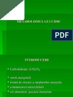 metabolismul-glucidic