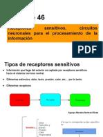 Presentación Fisiología - (Sensibilidad y Receptores) (1)