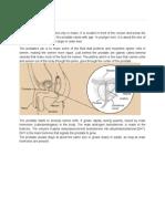 Prostate Cancer - Cancer.org