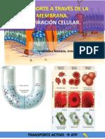 Respiración Celular y Fotosíntesis