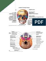 Anatomi Fisiologi Cranium