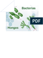 Bacterias y Hongos