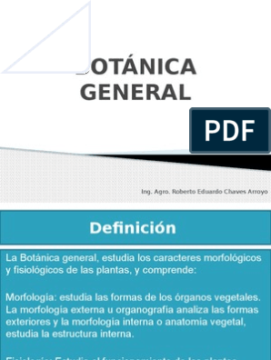 Botánica General Pptx Raiz Botânica