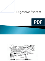14_ Digestive System complete.ppt