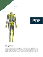Anatomi Kerangka Manusia