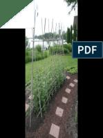 Bamboo-trellises-for-web.pdf