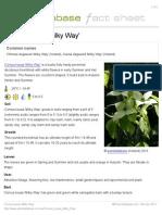 Cornus_kousa_Milky_Way.pdf