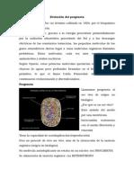 Evolución Del Progenota